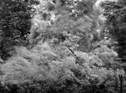 Blowing Trees, Nara